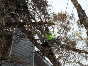 Tree Trimming and Pruning in Virginia Beach VA