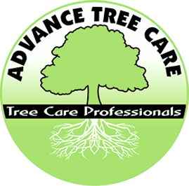 Advance Tree Care offers emergency tree sevrice