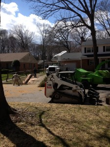 Our crew getting started on the White Oak Tree