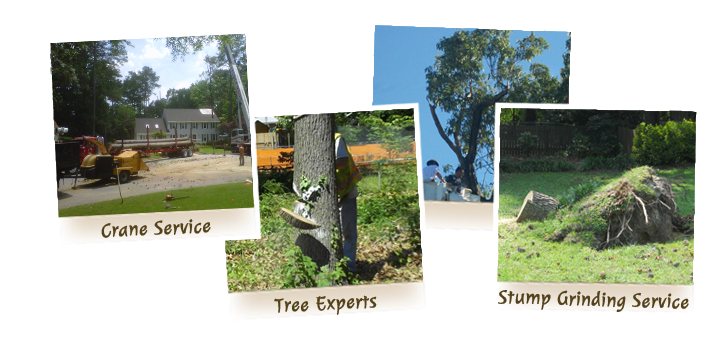 advance-tree-care-in-virginia-beach-virginia-slide-3