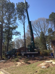 Us removing 4 pine trees right next to the driveway. We used a crane to prevent damage to the driveway.