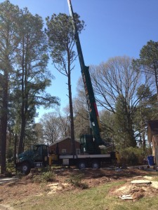 All of the trees in front of the crane were removed the day before