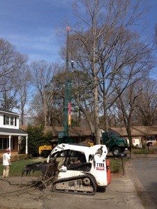 Taking the top. We had to remove this tree in small pieces to prevent damage to the surrounding trees