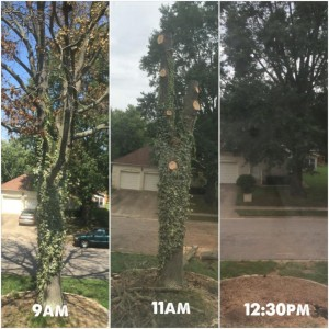 Virginia Beach Tree Removal Service Before and After
