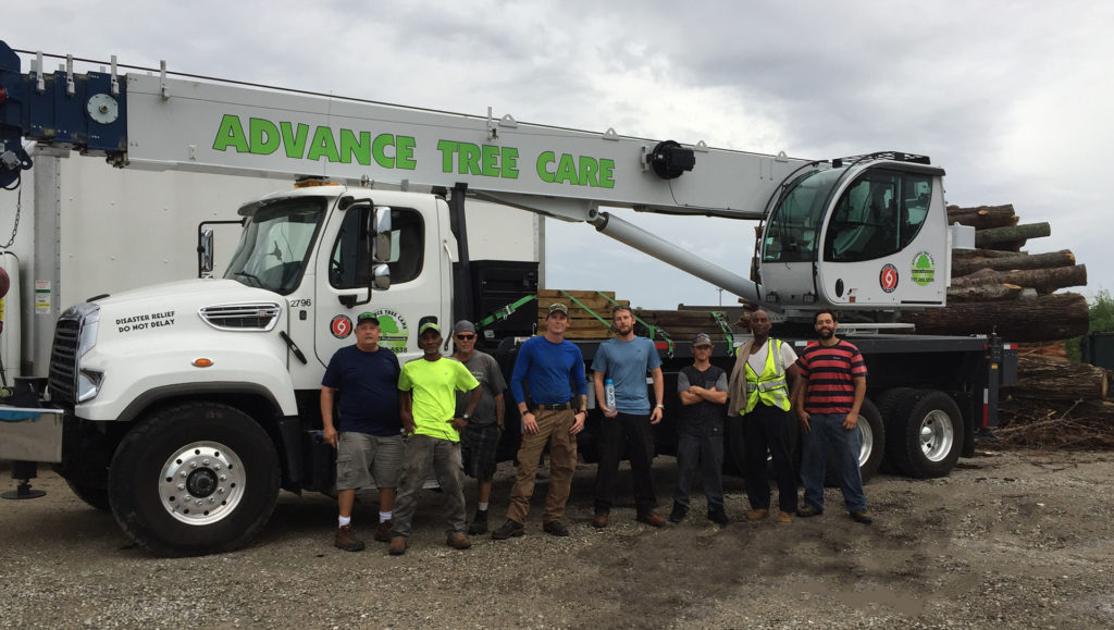 advance-tree-care-in-virginia-beach-virginia-crew