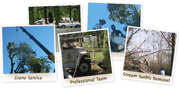 Tree Removal and Tree Services in Virginia Beach from Advance Tree Care - Home Image with Links to Tree Services