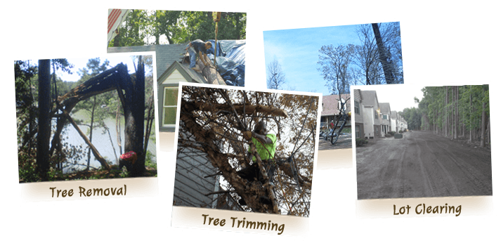 Virginia Beach Tree Removal and Tree Care Service from Advance Tree Care - Home Page links to tree care services