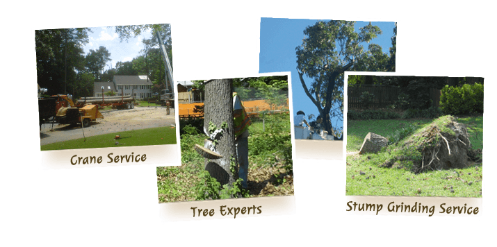 Virginia Beach Tree Removal and Tree Services from Advance Tree Care - Home Page image for links to tree care services