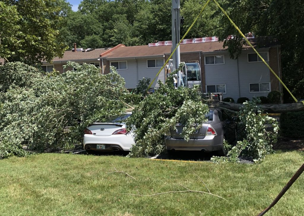 advance-tree-care-in-virginia-beach-virginia-storm-and-hurricane-tree-removal